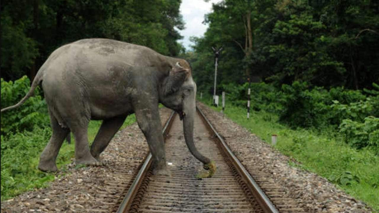 The instances of elephants found dead on railways tracks have surpassed man-elephant conflict in recent years.