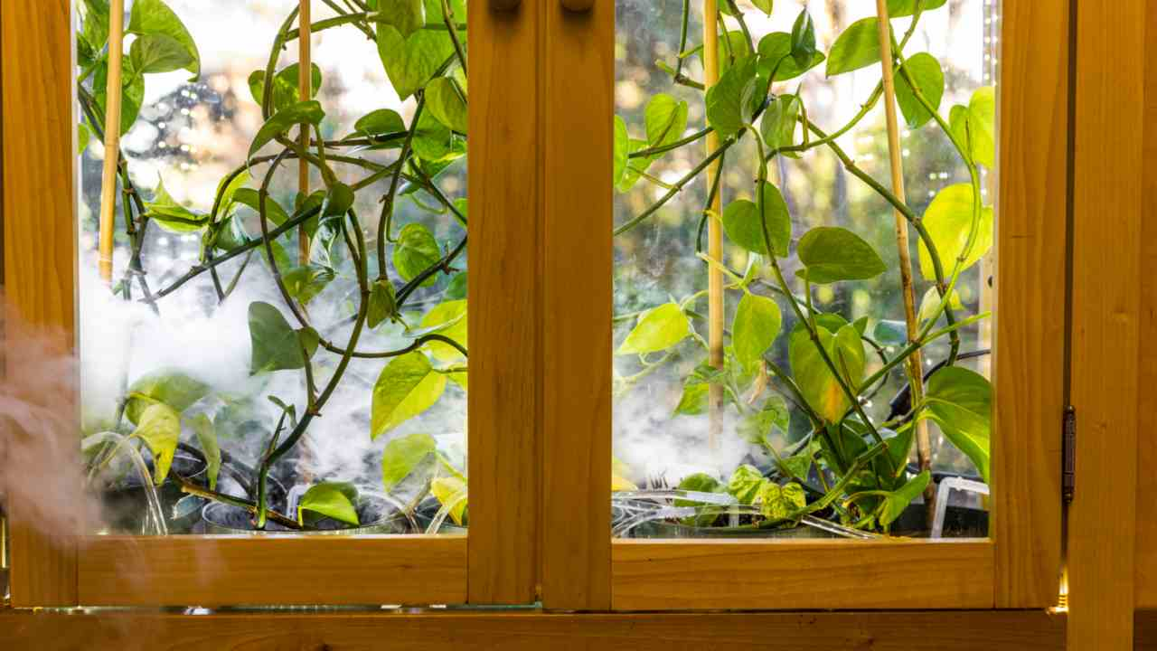 For plants in houses to be able to effectively remove hazardous molecules from the air, they would need to be inside an enclosure with something to move air past their leaves – like a fan. Image courtesy: University of Washington