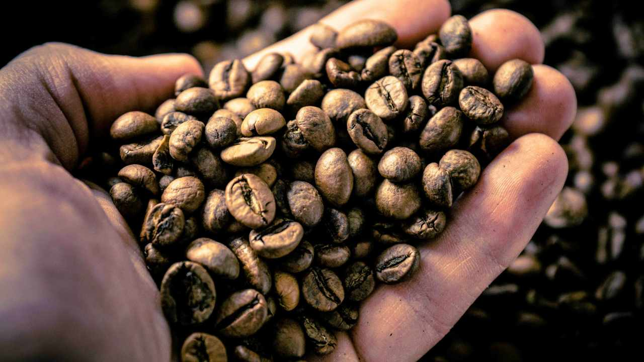 60 percent of coffee varieties under threat of extinction from climate change