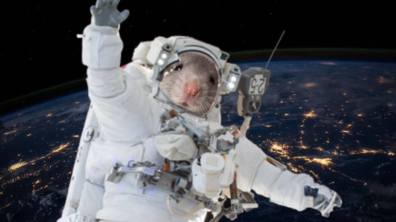Mice flown to ISS will help understand the process of ageing in space and on Earth
