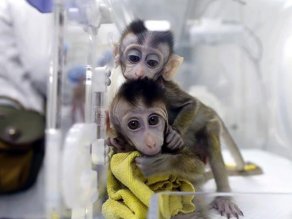 China clones gene-edited monkeys. Image: Reuters