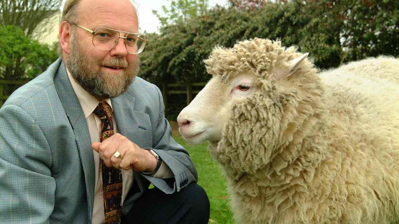 22 years since Dolly the first cloned sheep, heres how her legacy has come along