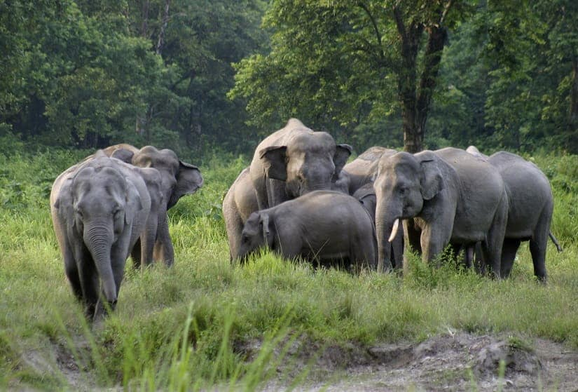 Assam with an elephant area (15,050 square km) the size of East Timor, is India's prime elephant range state, harbouring 5719 jumbos, the highest population of wild elephants in the country after Karnataka. REUTERS