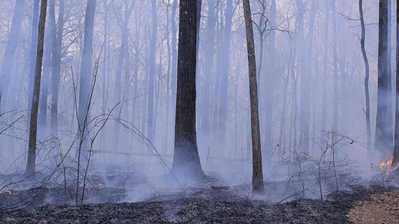 The afterburn in a forest before the last of the flames disappear. Image: VideoBlocks