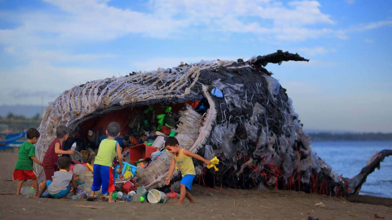 Dead whale found with 40 kilograms of plastic in its stomach