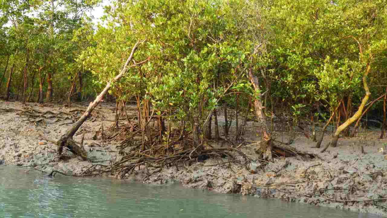 Earth Day 2019: Apple promotes mangrove conservation efforts in Colombian forests