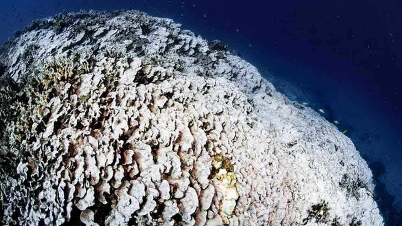 The Great Barrier Reef may not recover from the mass bleaching event that occurred in March.
