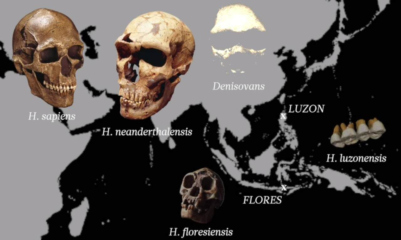 Map of all the early hominins, including Homo luzonensis. Image: Callao Cave Archaeology Project / Rob Rownd