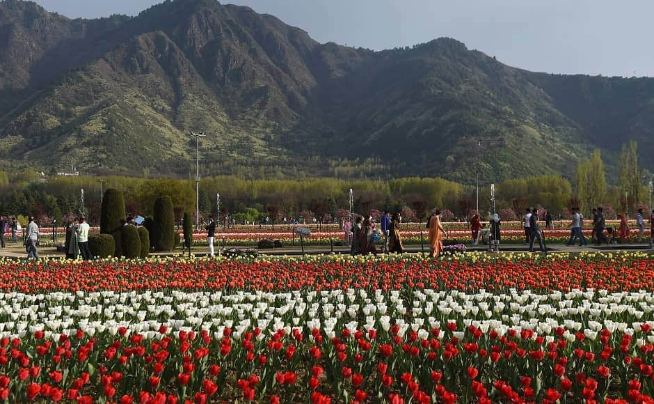 Siraj Bagh is Asia's biggest tulip garden, which was opened for tourists on 1 April and can be visited till 5 May. Image courtesy: PTI