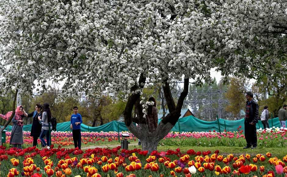 Even though the lakhs of tulips in various colours remain the tourist attraction, the garden has various other varieties of flowers, trees and fountains. Image courtesy: PTI