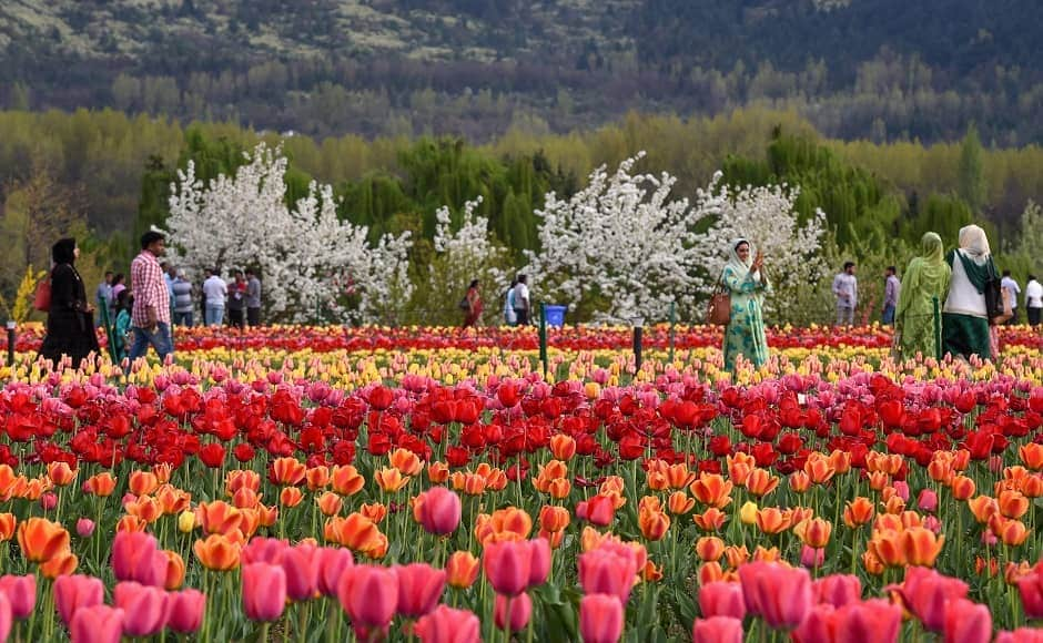 The garden sees high tourist footfalls every year. Apart from the Dal Lake, the garden also offers views of the Nishat Bagh, Pari Mahal and Chashma Shahi Bagh in the capital city of Jammu and Kashmir. Image courtesy: PTI