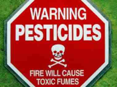 No pests in nature: Insects killed by pesticides have far more medicinal value than humans realise