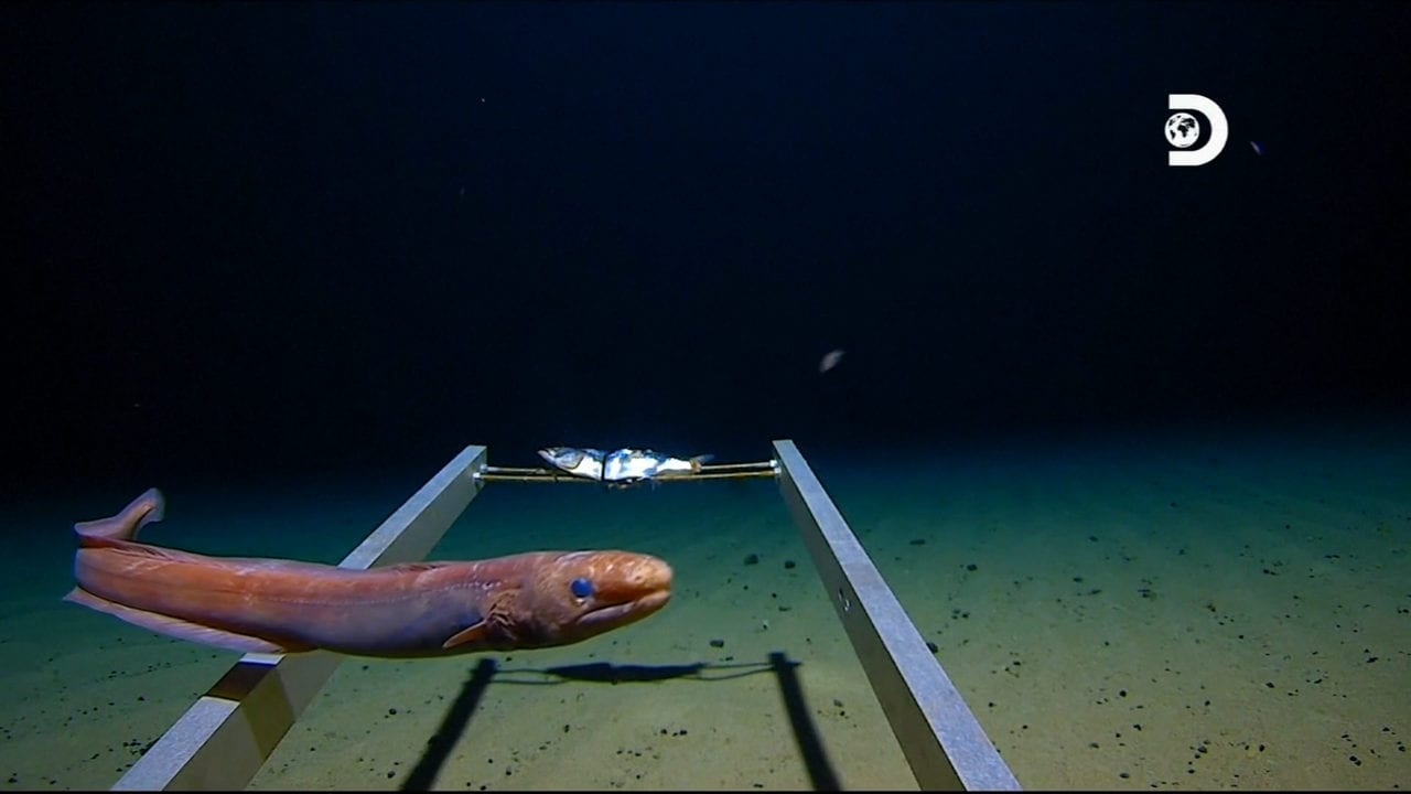 One of the new species captured on camera during the dive to the Marina trench . Image credit: Reuters /Atlantic Production