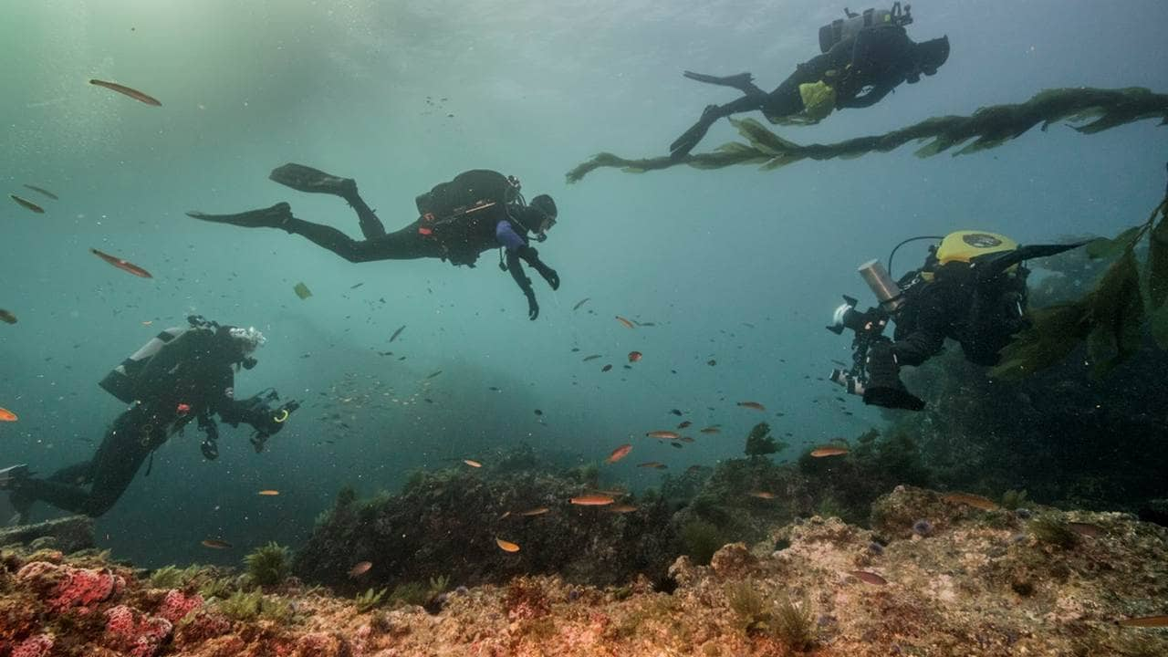 divers swimming underwater. image credit;  US national park service.