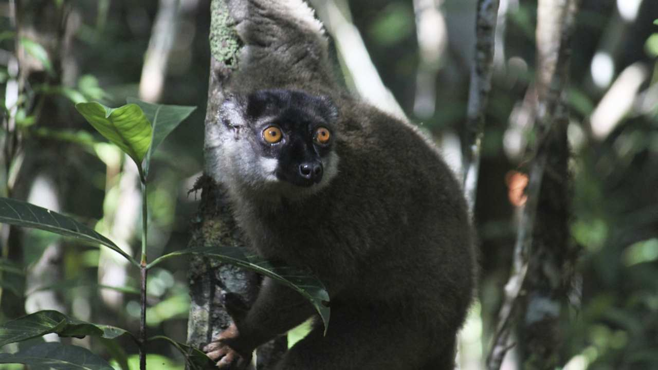 Extinctions of million species driven by mankind are looming, new UN report finds