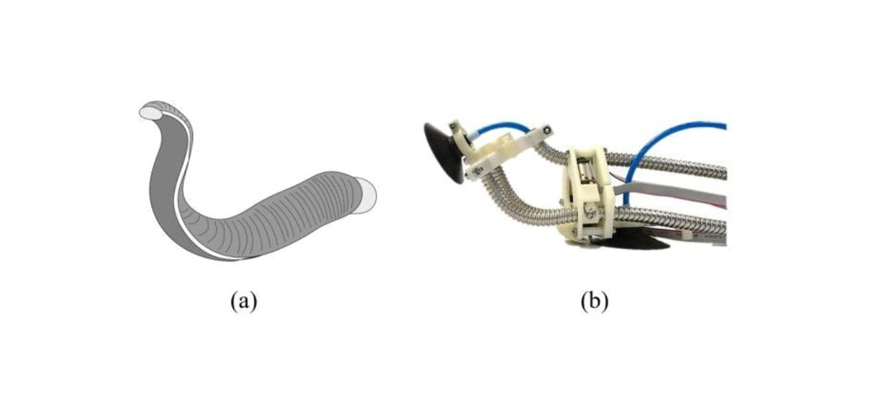 Sucker for walls: Soft robot inspired by leeches can grip, climb up walls like a pro