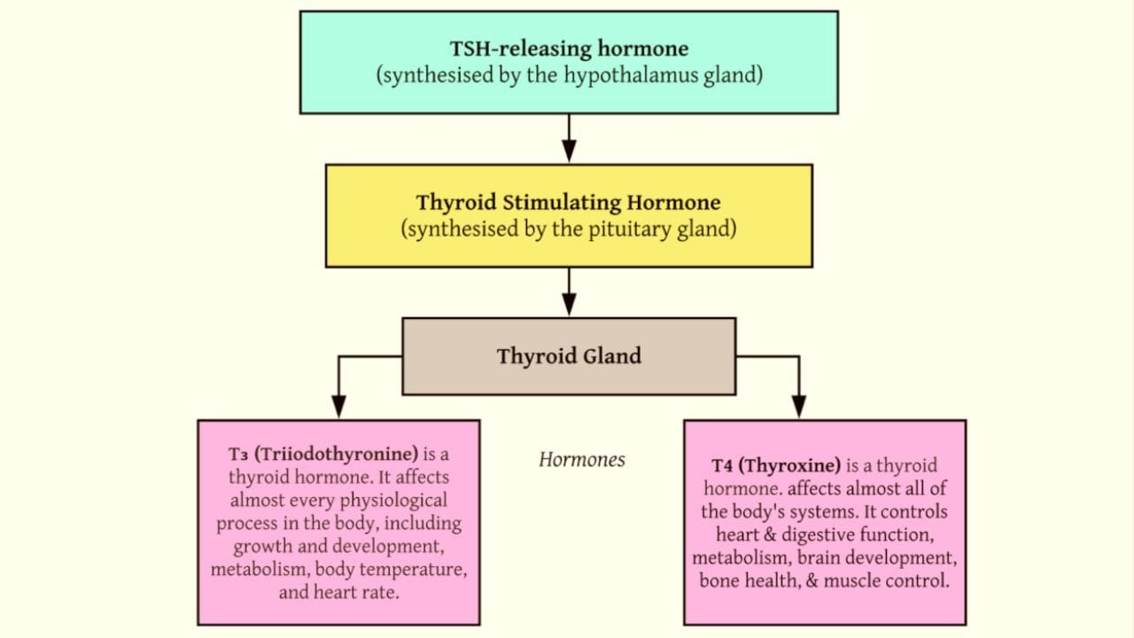World Thyroid Day Causes Symptoms Diagnosis And Treatment Of