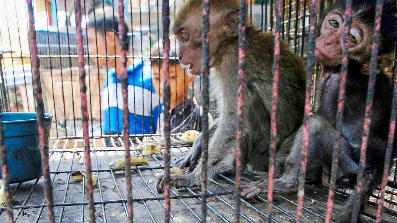 Despite regulations, illegal pet trade in India remains a haven for undocumented wealth, criminal activity, funding terrorism