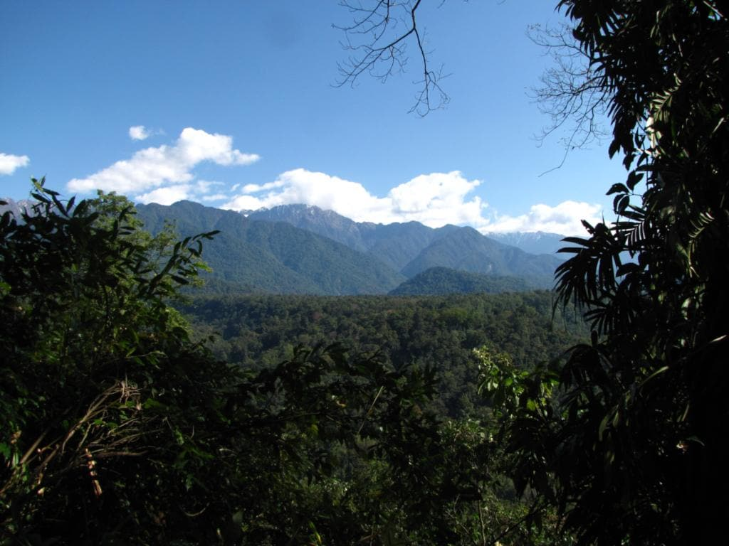 Wet forest landscapes such as those in Namdapha Tiger Reserve, Arunachal Pradesh, Northeast India are highly resilient to climate change. Image: Wikimedia Commons