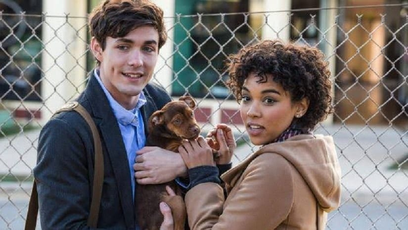 A Dogs Way Home movie review: Easy family watch but for several mawkish, manipulative moments