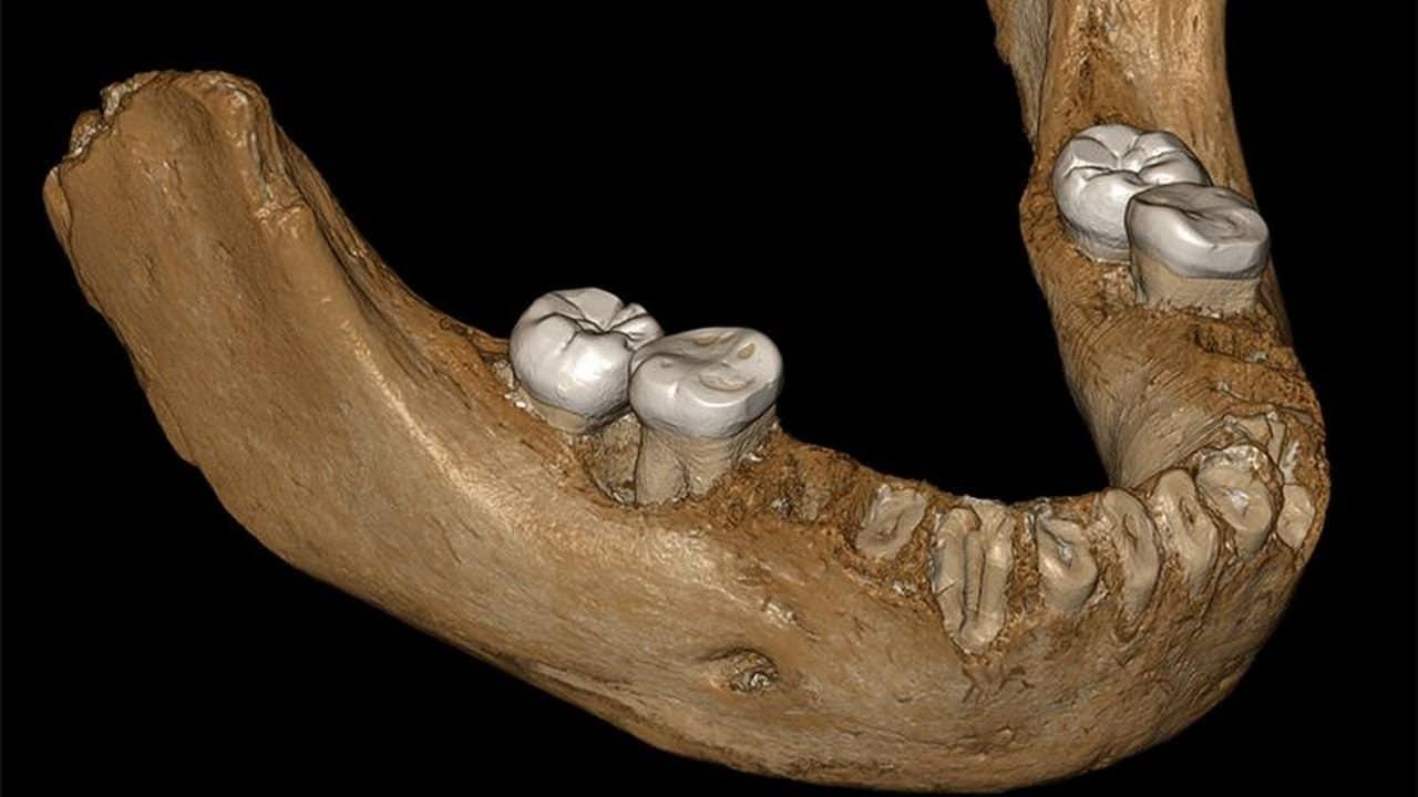 Denisovan ait çene fosili