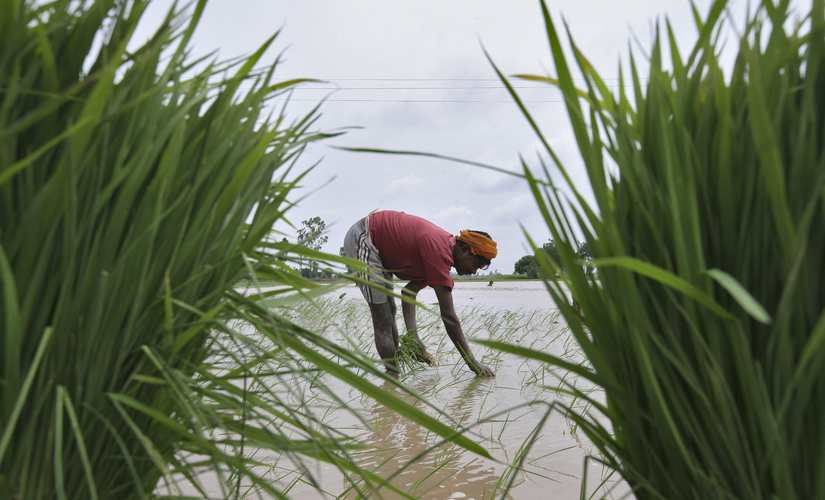 Paddy farming in Punjab has put a lot of stress in the state's groundwater. Reuters