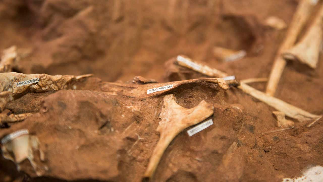 Fossils of dinosaurs that lived in a dessert have been unearth in Brazil