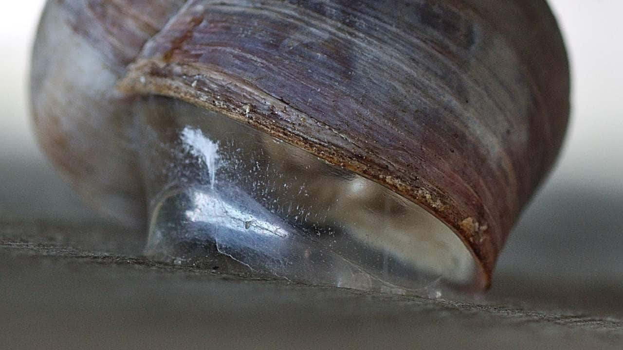 Reversible super-glue inspired by snails strong enough to hold a persons weight