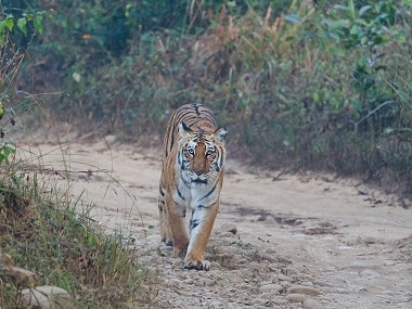 Notices to 15 websites for fraudulently using Jim Corbett tiger reserve's name to dupe tourists