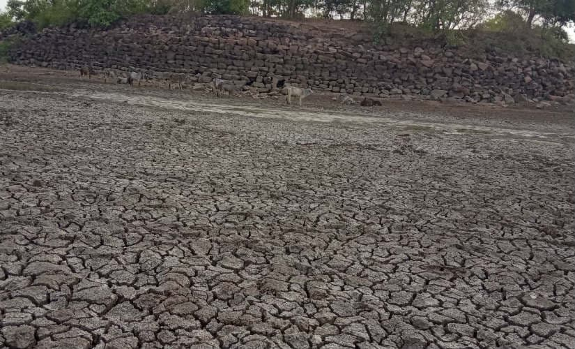 Villagers in Madhya Pradeshs Damoh are forced to drink from dirty pond frequented by animals due to water crisis
