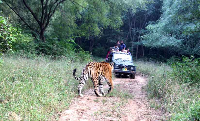 Rajasthans Sariska may become tiger-less again, fear experts, as male relocated to reserve dies; forest department sends SOS to NTCA