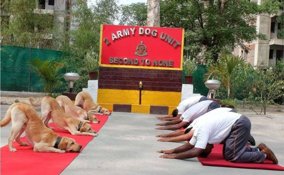 And in Jalandhar, members of the 2 Army Dog Unit performed doga (dog yoga), the canines doing the asanas along with the Army personnel. Image courtesy: Twitter/ @ANI