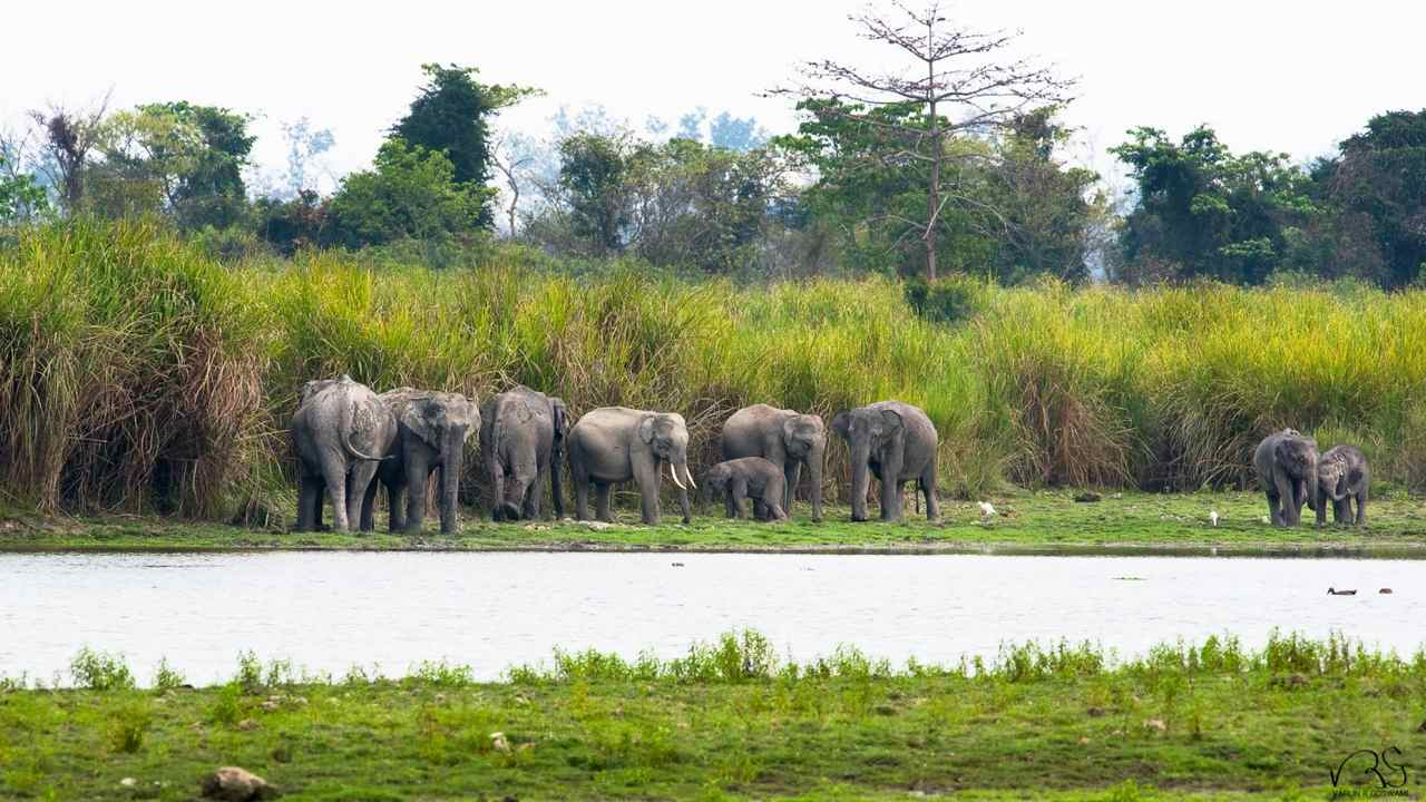 Elephants in Kaziranga. Photo credit: Varun Goswami