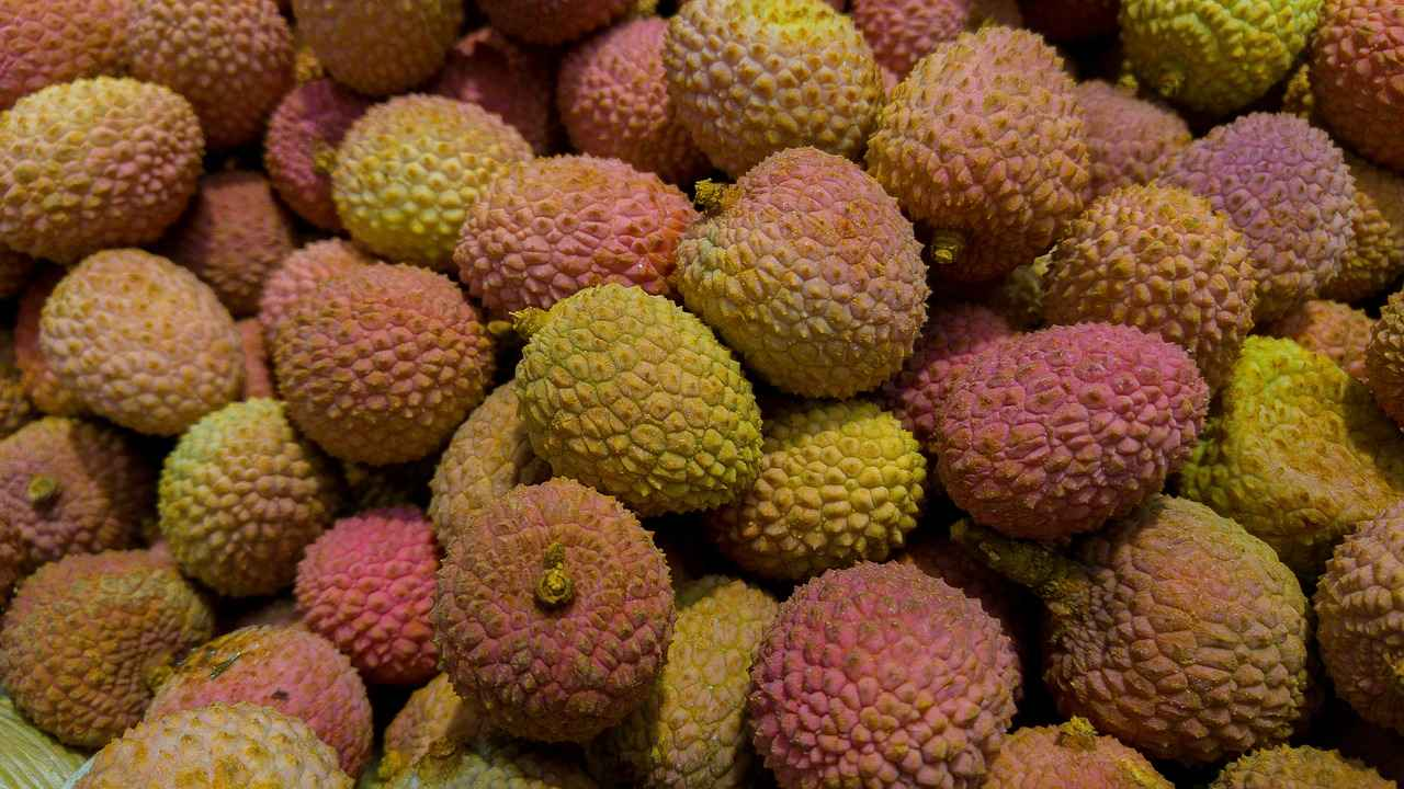 Raw litchis have a higher amount of MPCG enzyme, which can be dangerous to undernourished children.