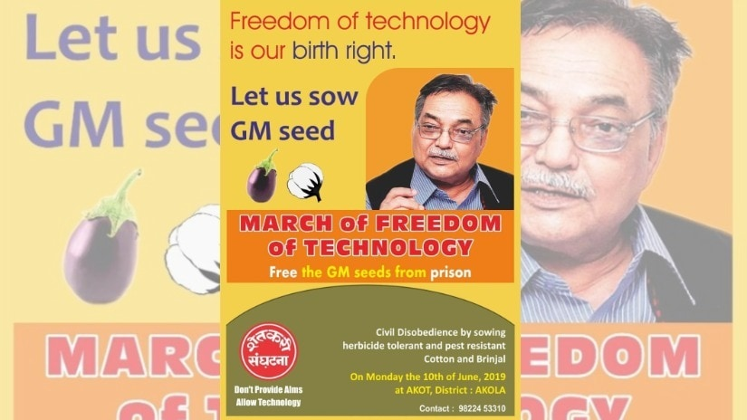 Maharashtra farmers group agitates for freeing GM seeds, but illegal varieties are rampant in India