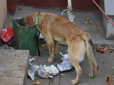 Siddipet civic body in Telangana kills 40 stray dogs, dumps some bodies in landfill; four officials suspended