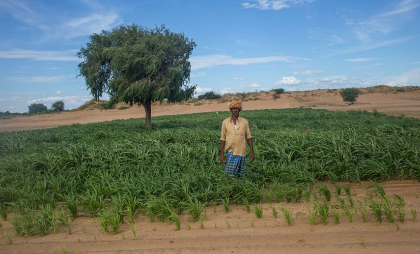 Raining sand in Rayalaseema: Andhras Anantapur district shows dramatic effects of crop pattern changes, waning forest cover, proliferation of borewells