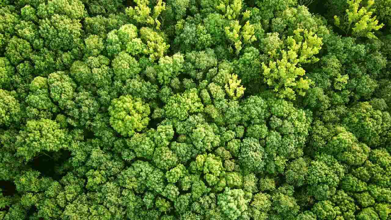 Reforest an area the size of the US to help avert complete climate breakdown