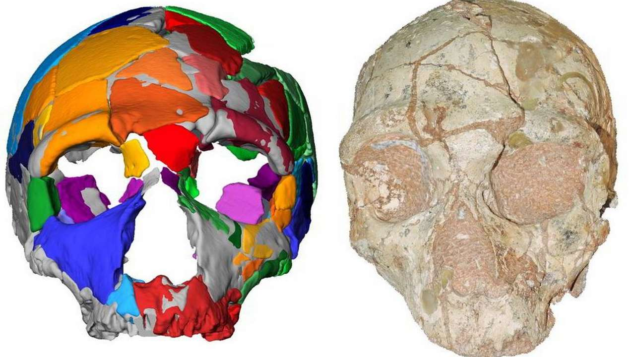 A chunk of skull found in Greece is the earliest sign of humans outside of Africa