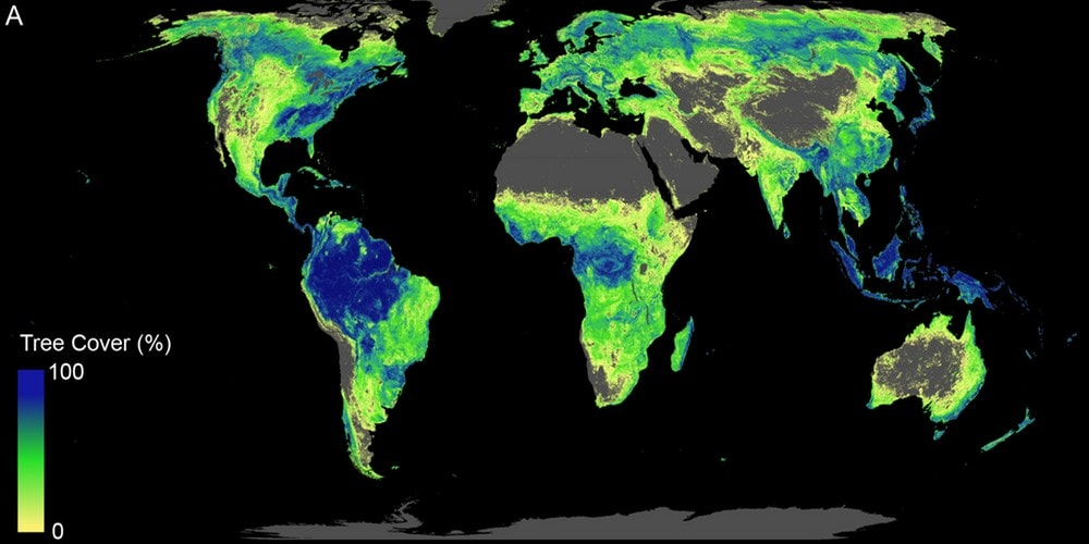 How all of that new forest would look, alongside what's already there. Crowther Lab, Author provided