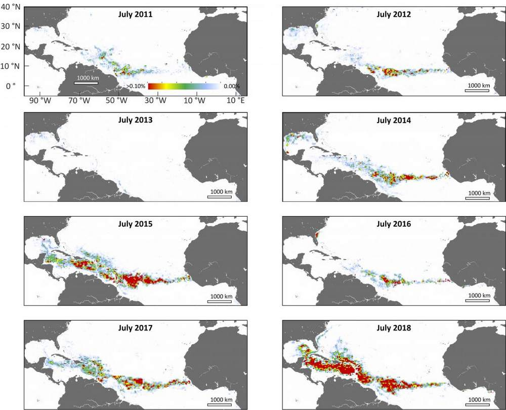 NASA's satellite data (MODIS) confirms that the record-breaking seaweed belt forms in the summer months (northern hemisphere). 2015 and 2018 had the biggest of the massive blooms that started in 2011. Image Credit: USF College of Marine Science