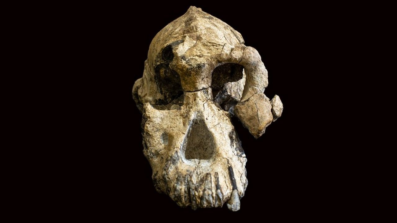 This is the front profile of the fossilized cranium of Australopithecus anamensis. Image credit: AP