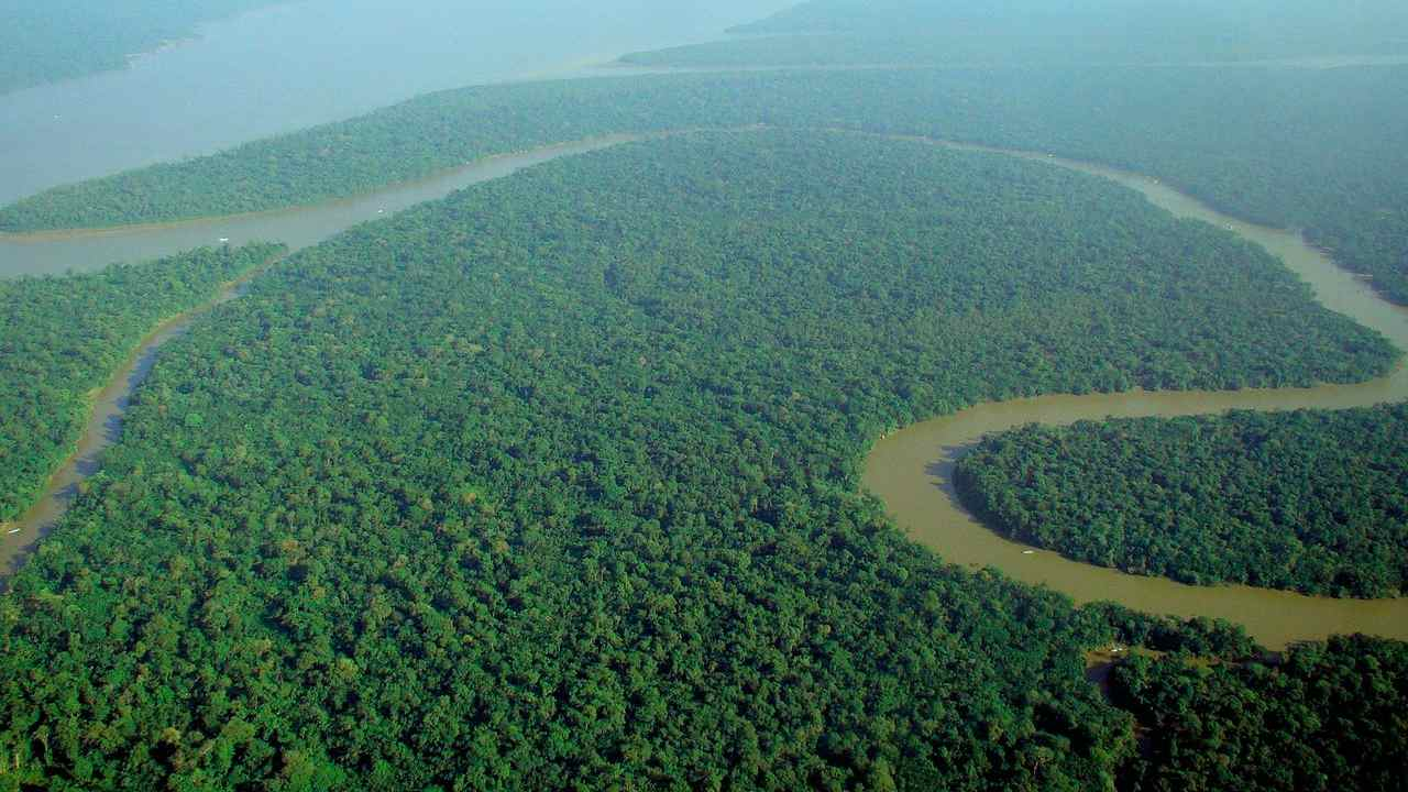 "Deforestation rates in the Amazon had increased ""dangerously"" in the past three years. image credit: Wikimedia Commons/ Lubasi"