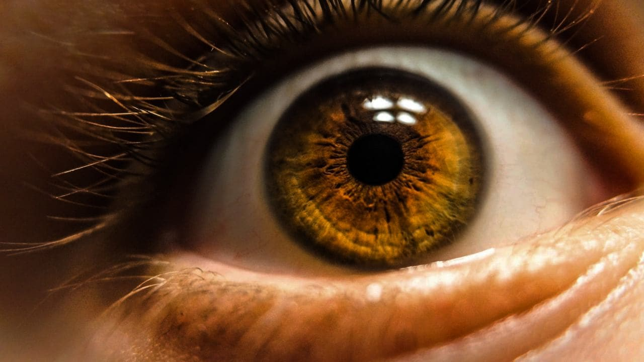 New kind of cell in the eye that perceives brightness discovered by researchers- Technology News, Firstpost