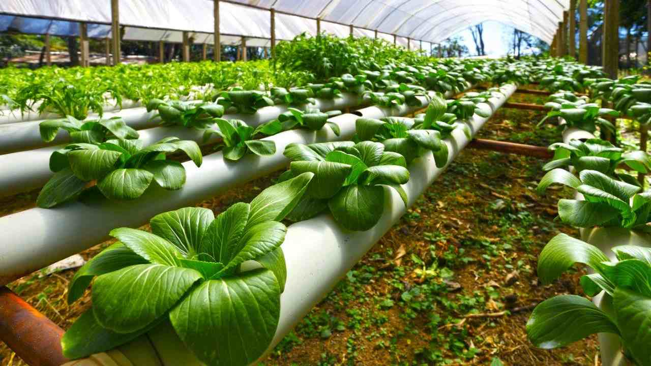 Nanotechnology promises less damage, better benefits for agricultural produce