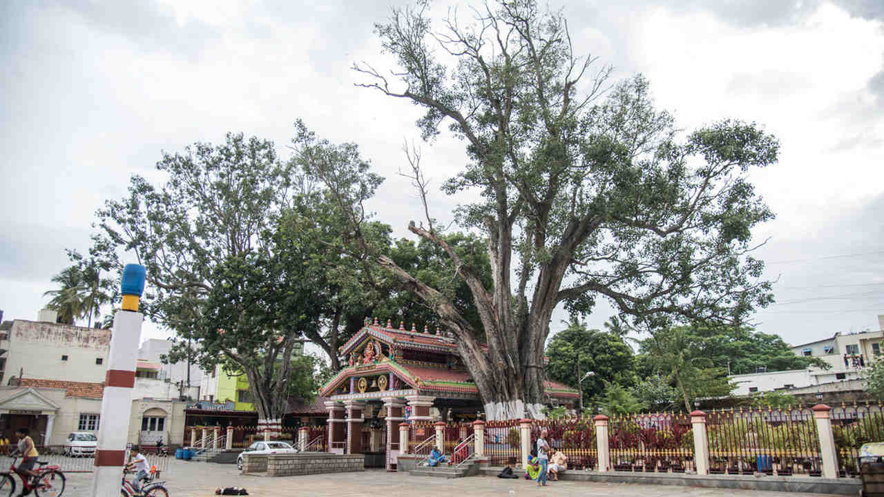 Sacred sites in Bengaluru: Where heritage helps conserve biodiversity- Technology News, Firstpost
