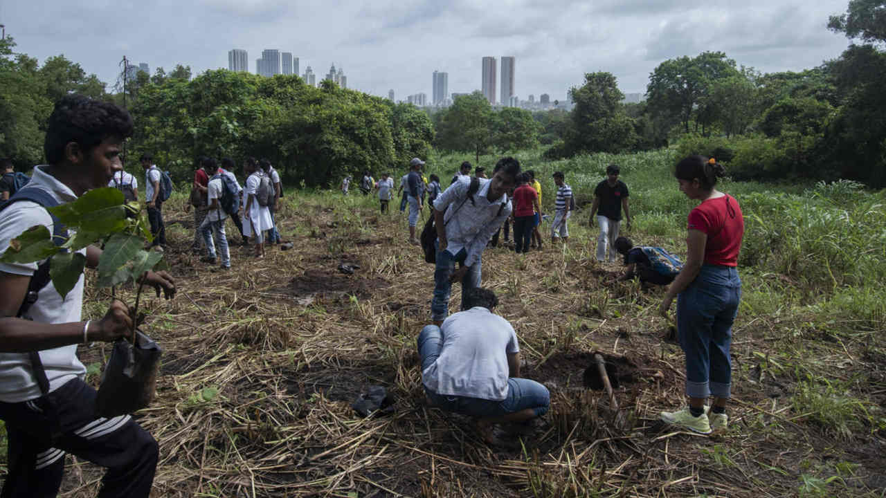 Participants plant peepal seedlings in a plot of land in Aarey. Over 400 people attended this plantation drive by the Athalyes to plant 300 peepal saplings. Image credit: Kartik Chandramouli/Mongabay.
