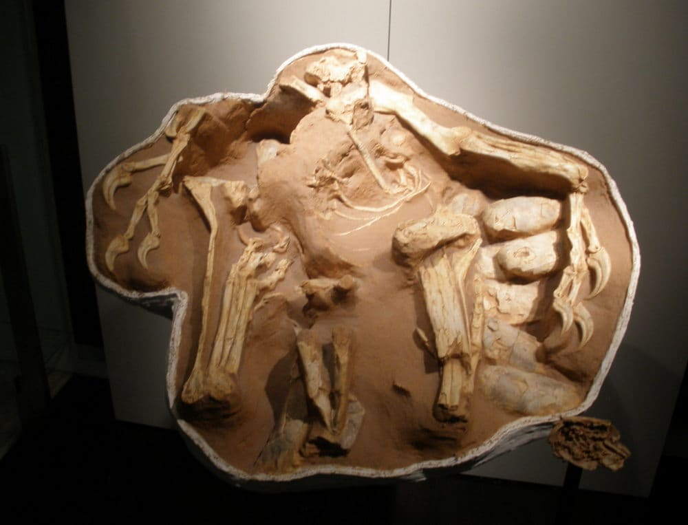 'Big Mama' Oviraptor brooding egg clutch – parental care in action? Image credit: Ghedoghedo/Wikimedia Commons