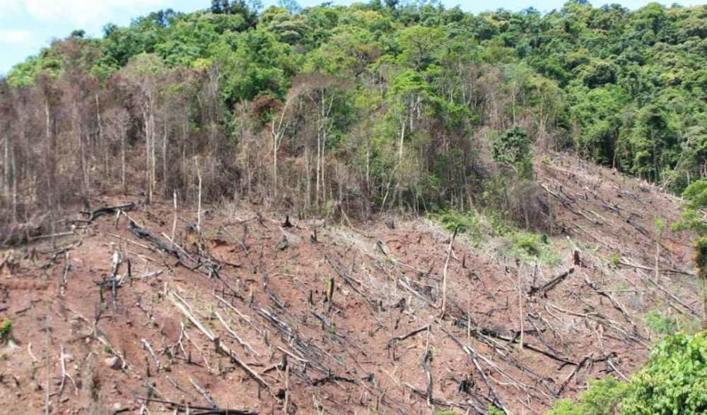 Deforestation in Africa is not as bad as it is in South America. Image credit: ICUN