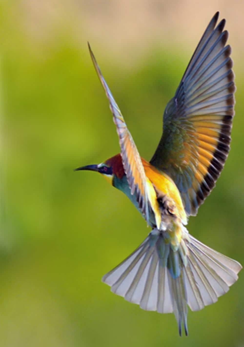 PAM-logger on European bee-eater. Image credit: Bernd Skerra 2016
